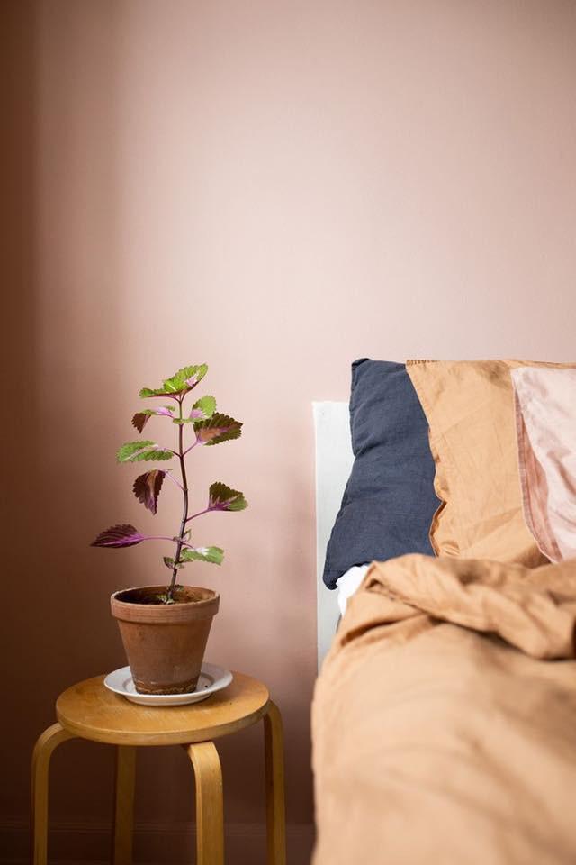 Ngủ có giúp cơ thể tăng khả năng miễn dịch tốt hơn để phần nào chống lại COVID-19 (CORONA) không?
