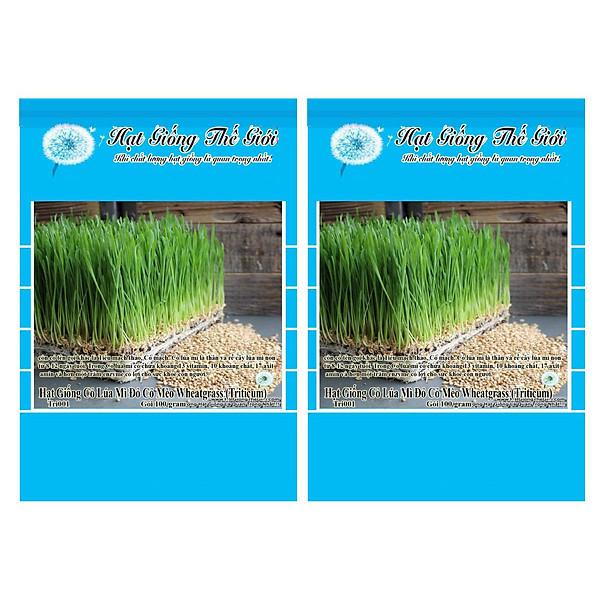 So Sánh Giá Bộ 2 Gói Hạt Giống Cỏ Lúa Mì Đỏ Cỏ Mèo Wheatgrass (Triticum Aestivum) 100g