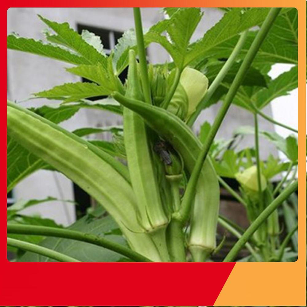 So Sánh Giá Hạt Giống Đậu Bắp Xanh - Nảy Mầm Cực Chuẩn